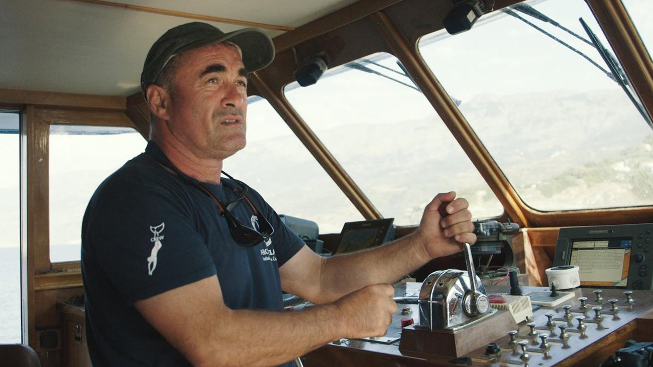 Aegean Marine Life